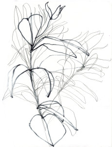 dg-plant